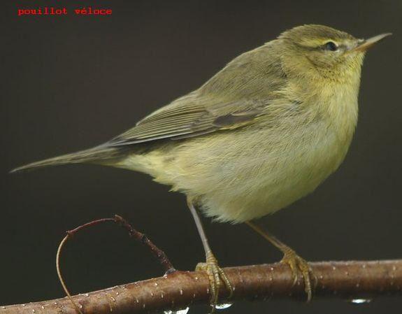 Sortie nature de Natur'Jalles le samedi 2 juillet les oiseaux du «Parc Majolan et Moulin blanc» et son album