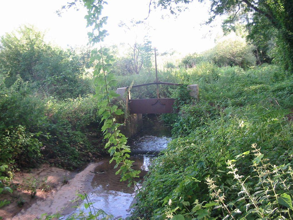 La Biodiversité en ville , ou comment fonctionnent les corridors biologiques
