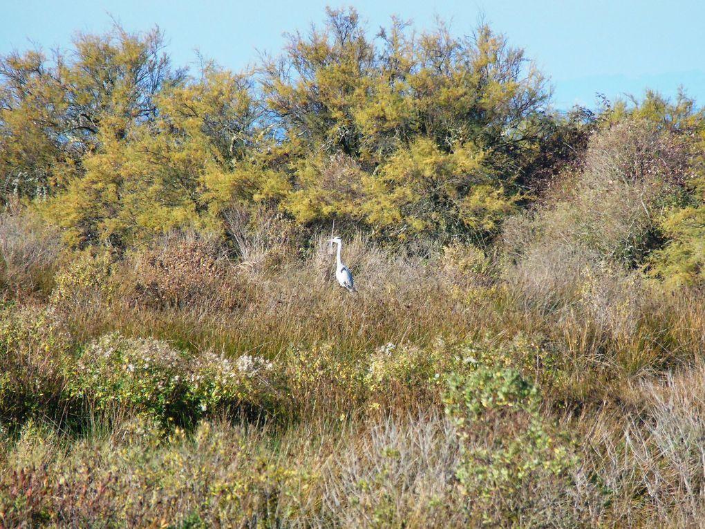 Sortie nature avec  Naturjalles : la découverte du domaine de Certes, mercredi 7 décembre 2016