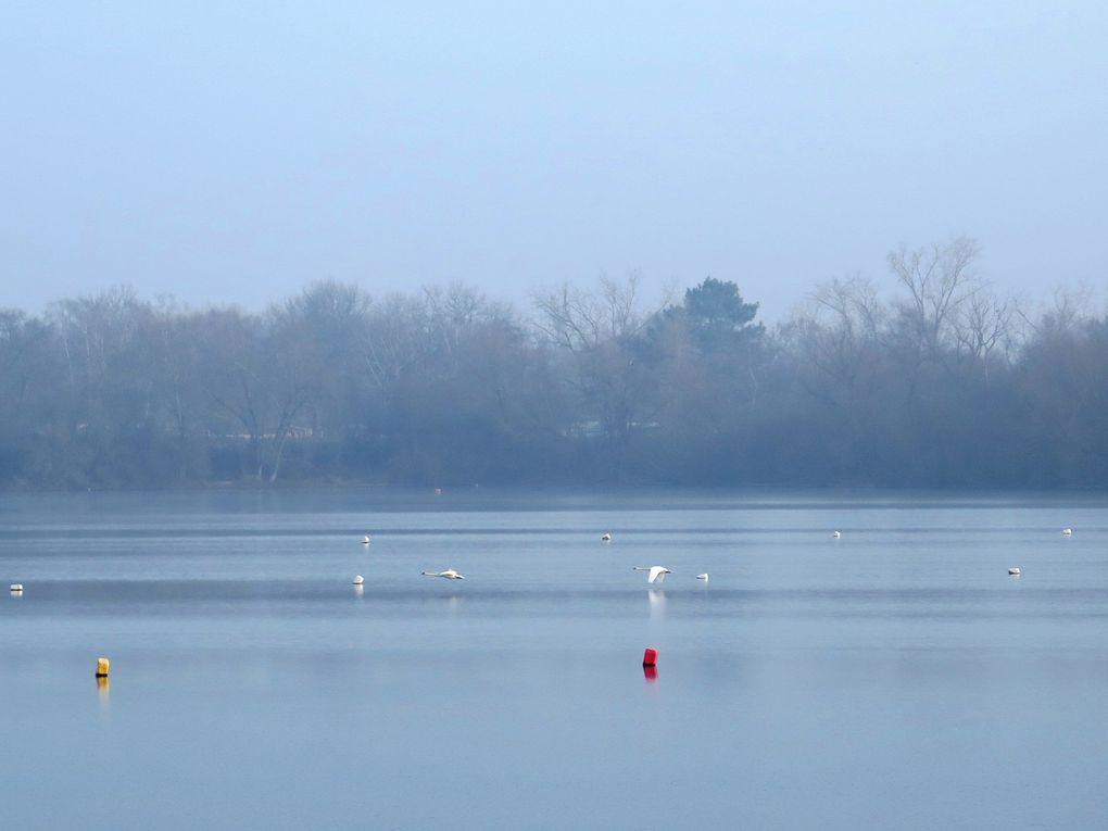 Sortie nature avec Naturjalles: les oiseaux d'eau hivernants sur les lacs de Bordeaux et de Blanquefort, mercredi 25 janvier 2017