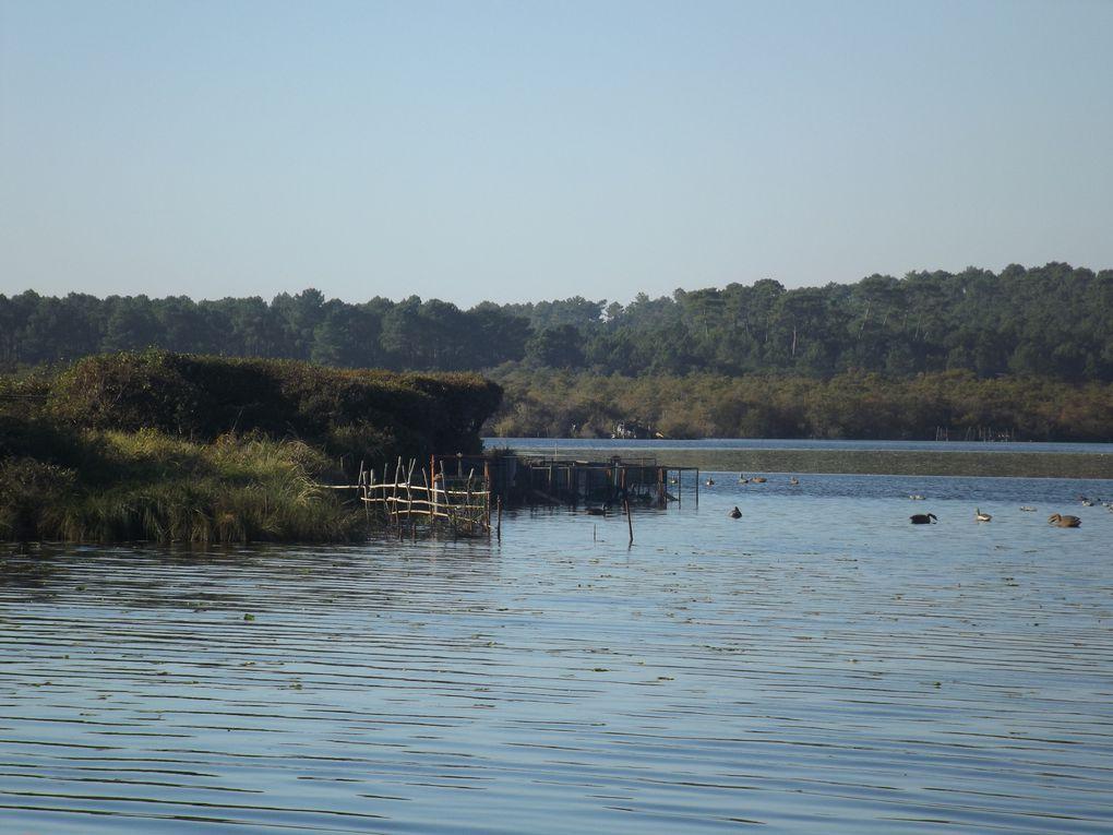 Chasse à la tonne et ses appeaux vivants sur l'étang de Léon