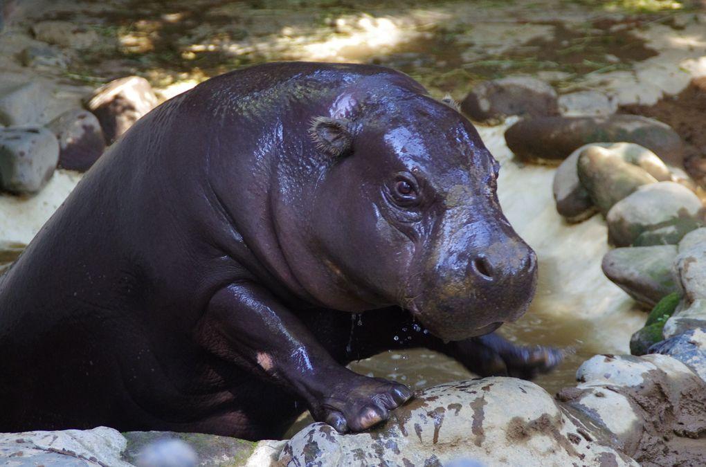 On a poursuivi par les animaux d'Afrique (dixit le zoo). (diaporama)