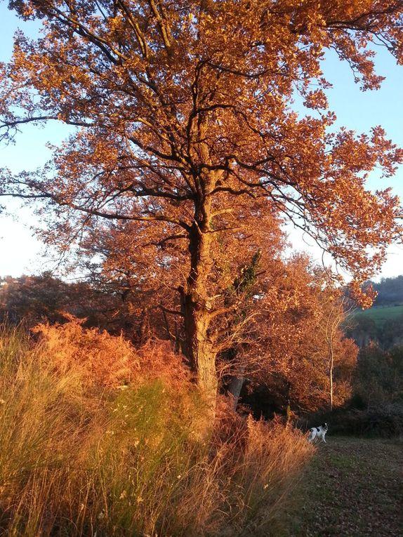 Couleurs d'automne et gelées blanches à Tosulech... novembre - décembre 2013