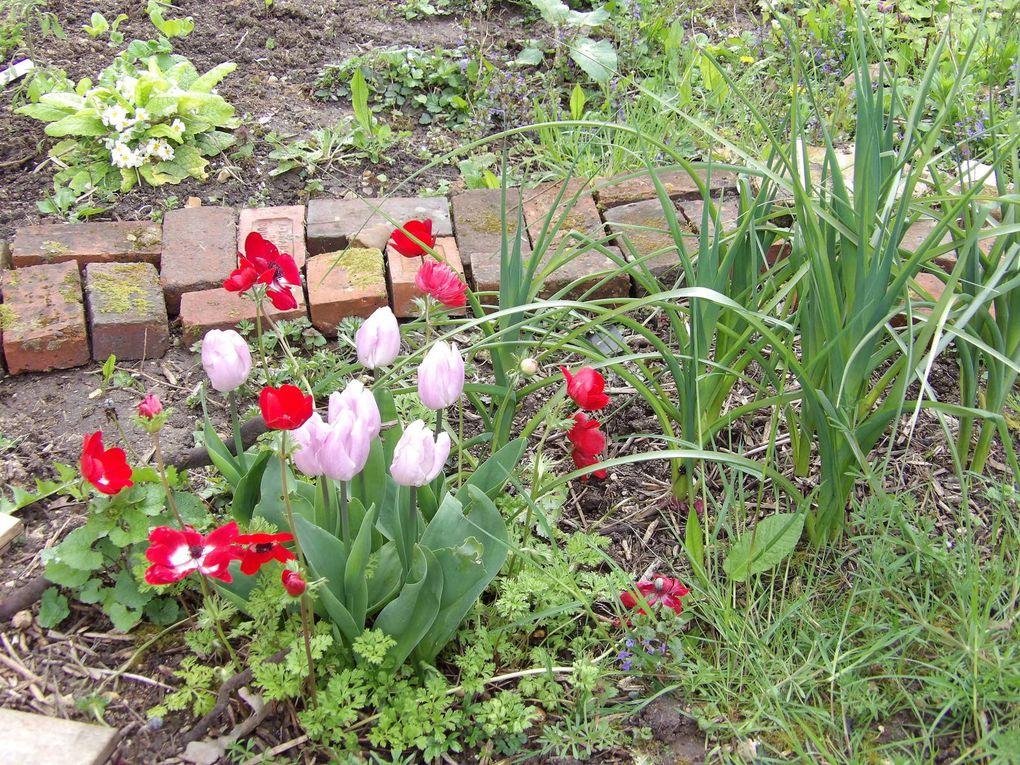 La maison daudet nouvelles de printemps la maison d 39 alphonse daudet - Printemps de la maison ...