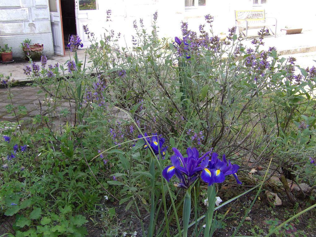 """petite visite du jardin... en attendant """"Paroles de Nuit"""" du 2 juin"""