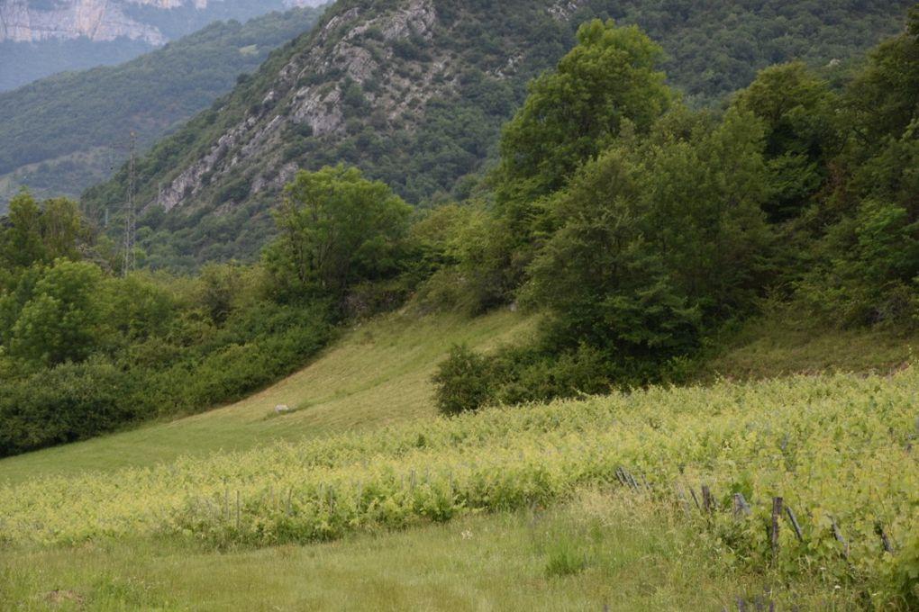 Notre étape La Tour de la Place dite Tour des Archers- En contrebas Le Clos St Anthelme