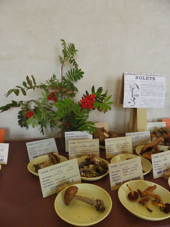 L'exposition mycologique 2013 en chiffres et en photos