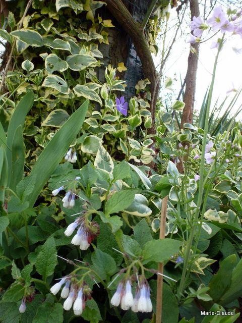 Mignonnettes du printemps,