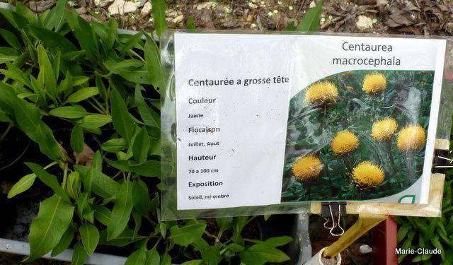 Fête des plantes aux carrières de Montigny,