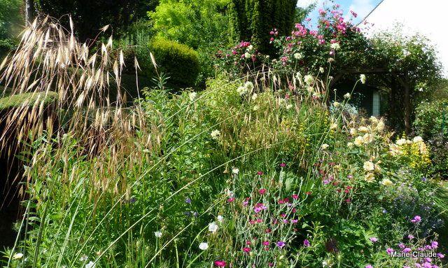 Un jardin dans l'Oise ( suite )