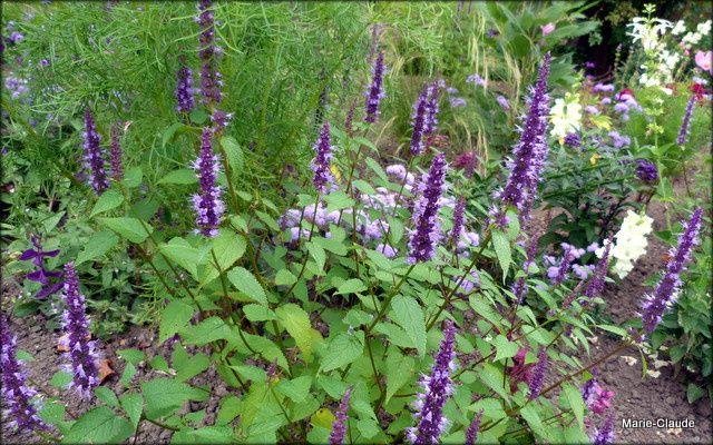 De retour aux jardins de Blérancourt,