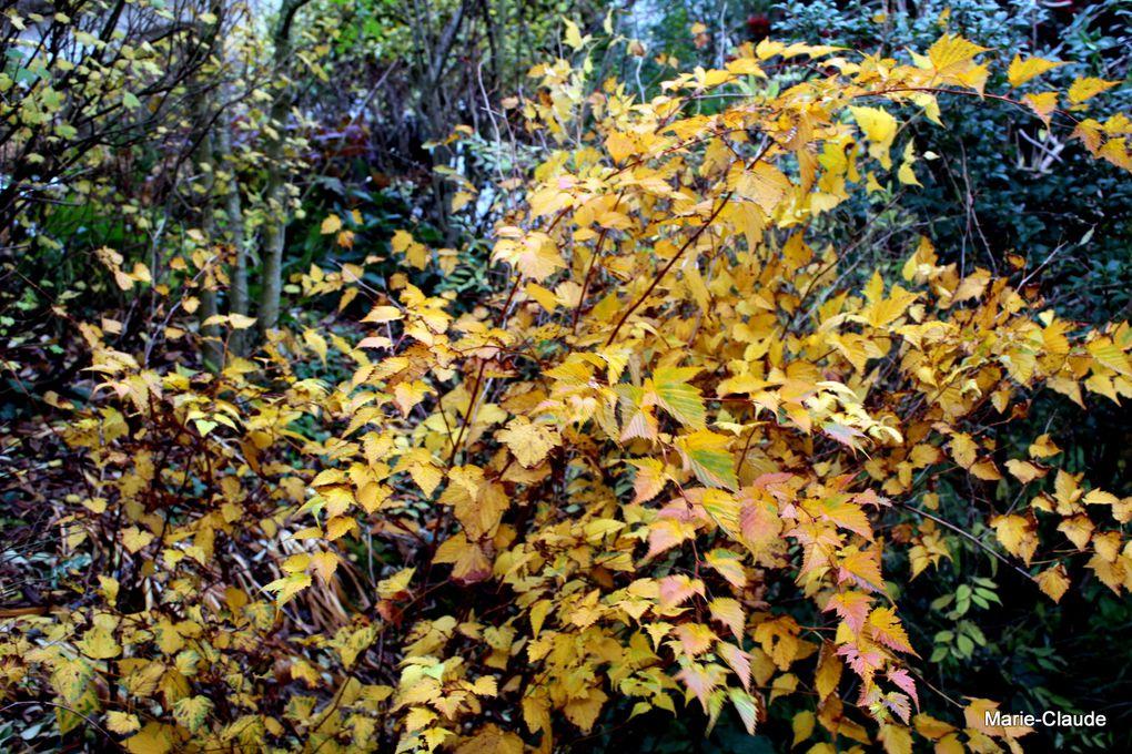 Une belle présence au jardin de novembre