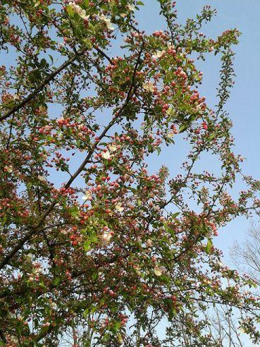 Nuovi alberi in villa Annoni, le foto