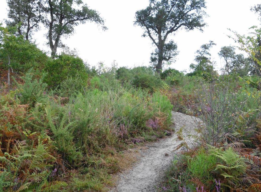 Tour de l'étang de Moliets ( Landes 40 ) AA Balade