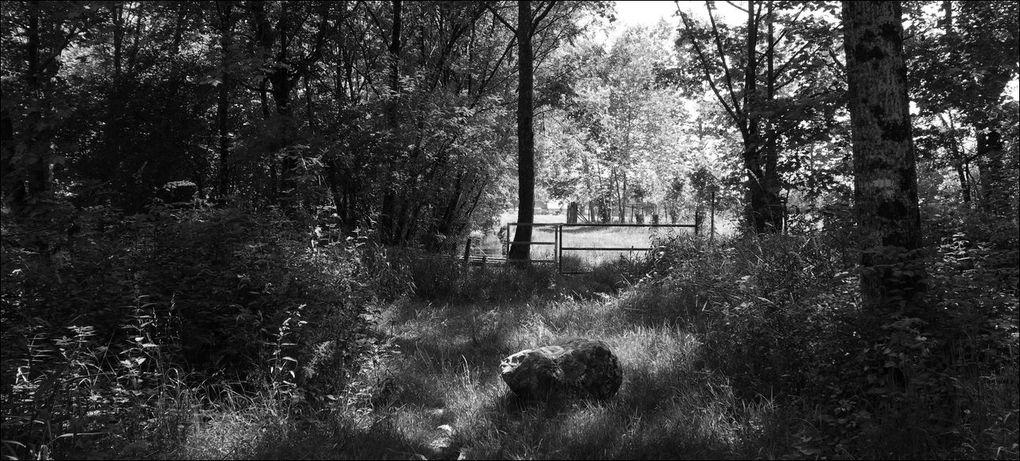 Balade à Saint-Martin-de-Seignanx (Landes 40) AA
