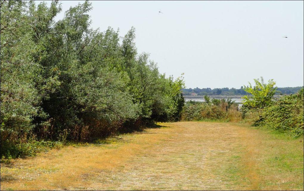 Île Madame (Charente-Maritimes 17) AAA