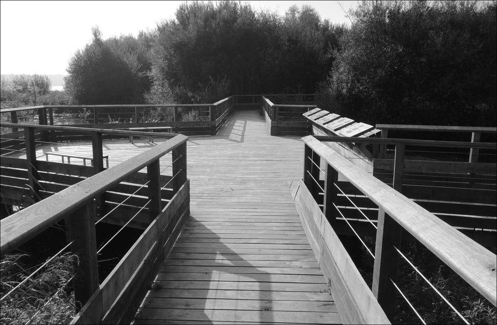Marais d'Orx (Landes 40) Balade