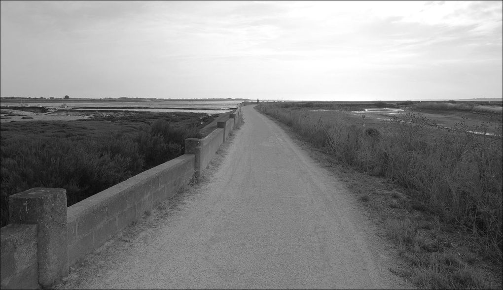 Rando Loix à Saint-Matin-de-Ré (Charente-Maritime 17) AA
