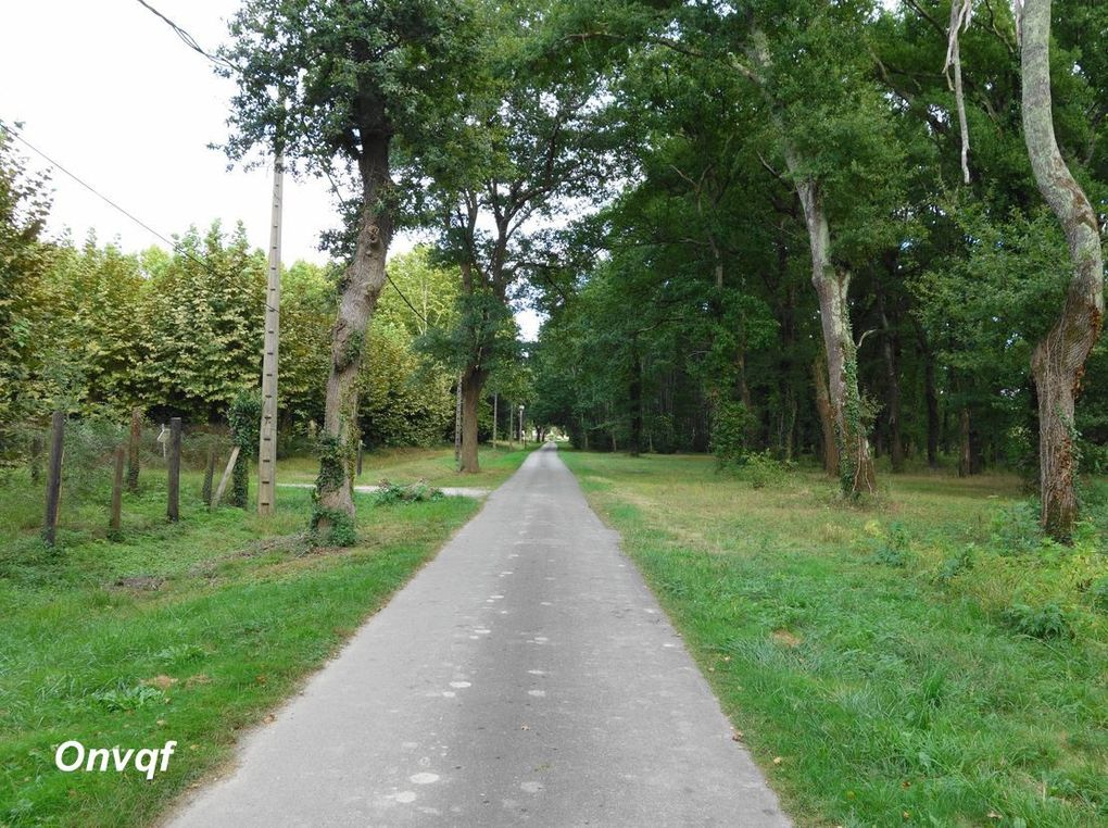 Circuit des Barthes Neuves , Mées (Landes 40) A balade