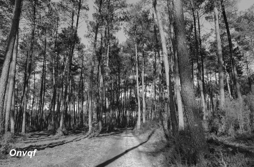 Boucle à Gourbera (Landes 40) A Randonnée