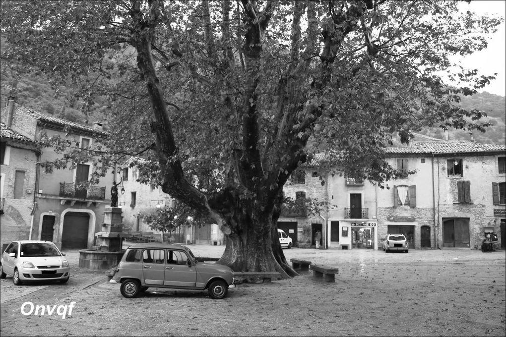 Platane Saint-Guilhem-le-Désert (Hérault 34) AA