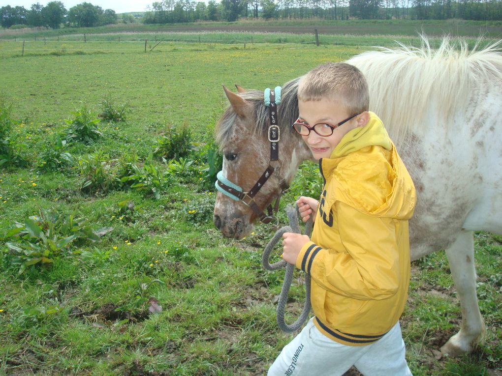 La sortie poney