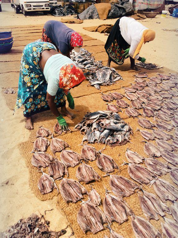 Marché au poisson de Negombo