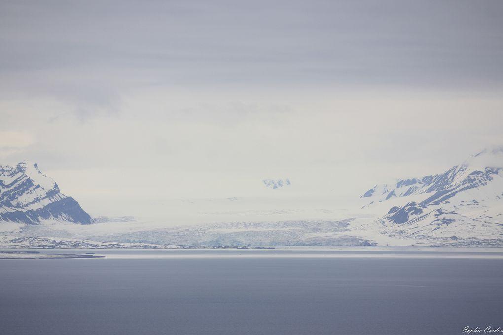 ça a l'air de bouger pas mal au niveau des fronts glaciaires cette année
