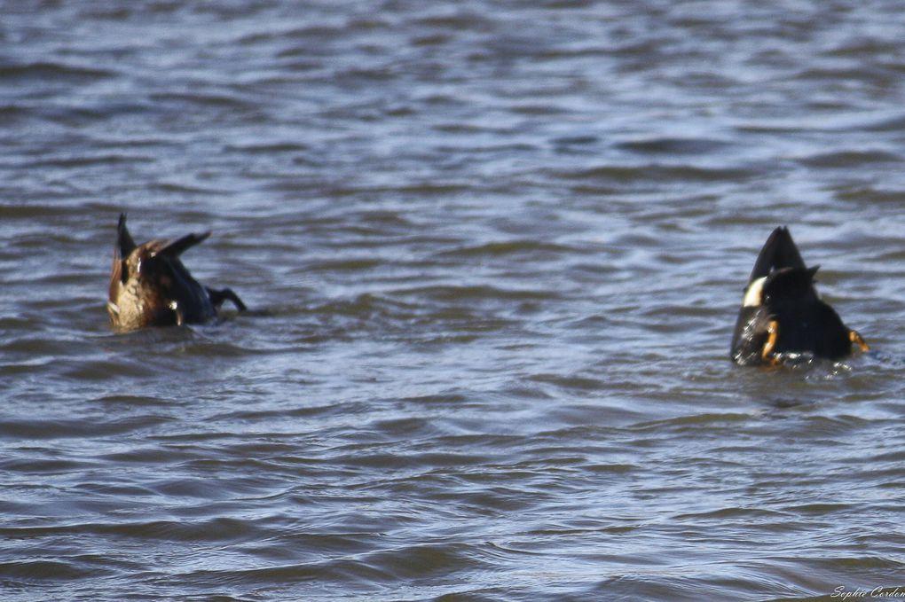 Sortie ornithologique dans l'Adventdalen