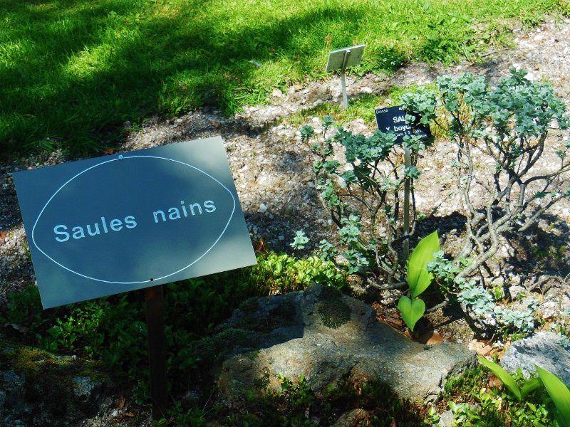 Jardin Botanique - Haut Chitelet (88)