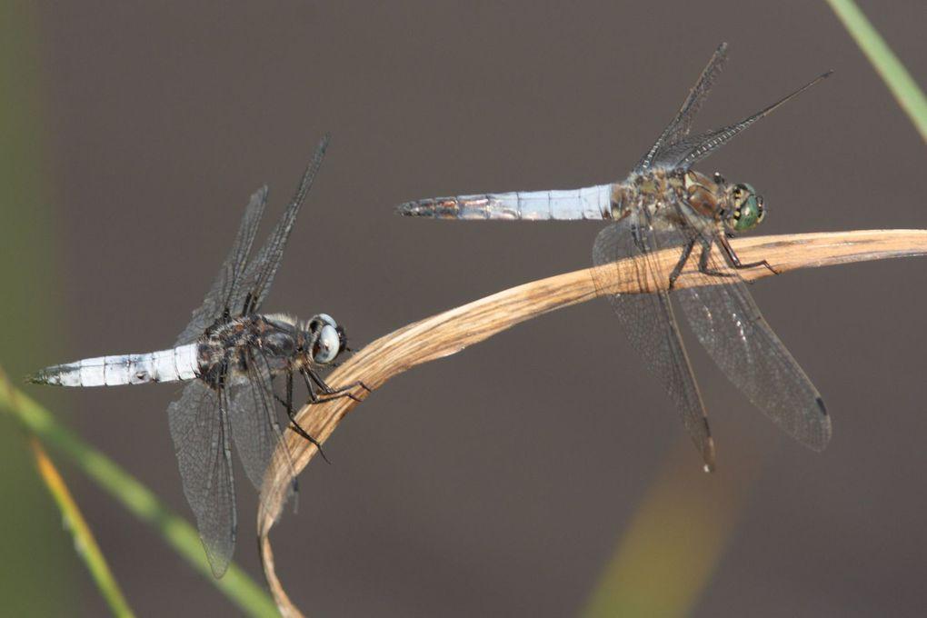 Insectes en Touraine au mois de Juillet