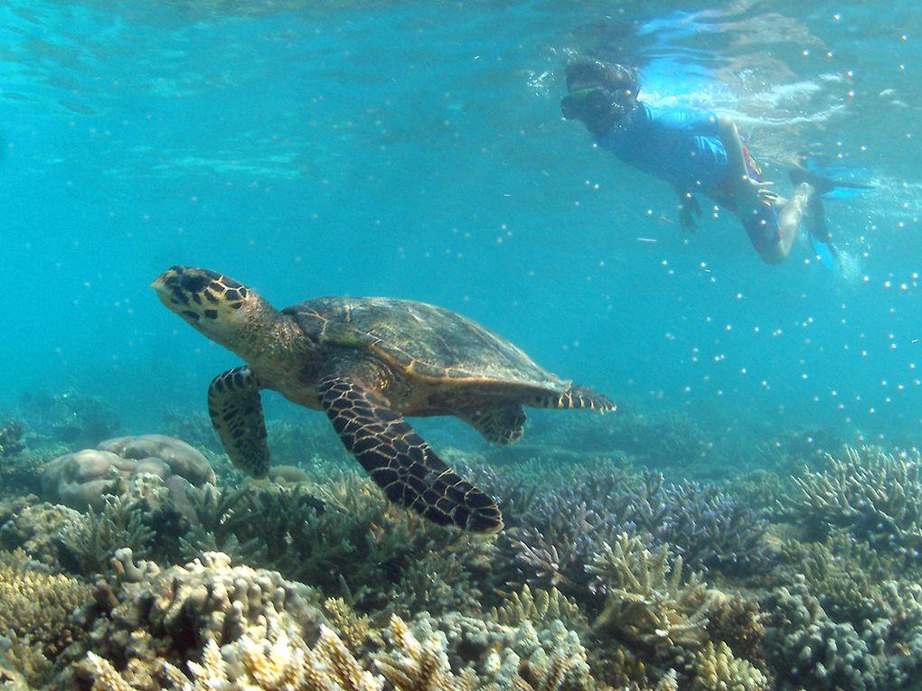 Les Maldives toujours les Maldives.......