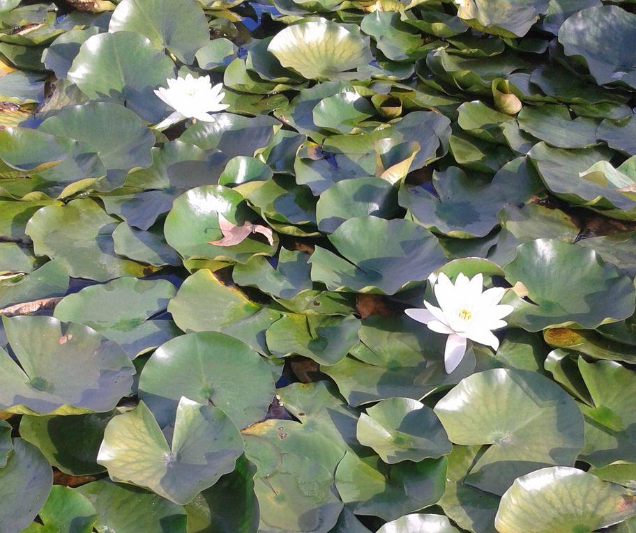 Jardin botanique bordeaux le blog de lacousinechristine for Jardin botanique bordeaux