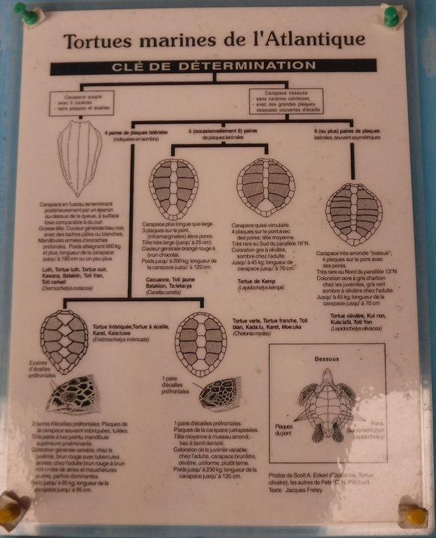 Centre des tortues