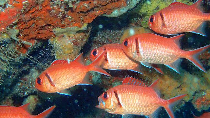 Plonger en Martinique