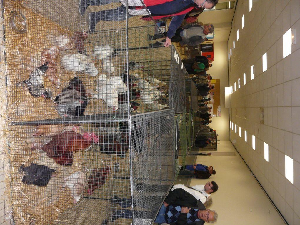 25ème marché aux volailles