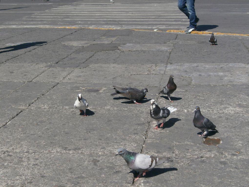 spéciale dédicace à Ohian et Thiago pour les pigeons , photos by Naïa