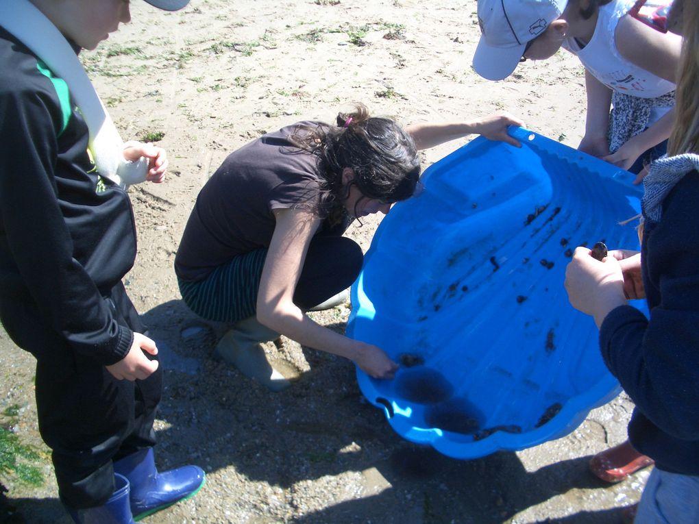 Deuxième journée à Pénestin: pêche à pied et création de nos aquariums