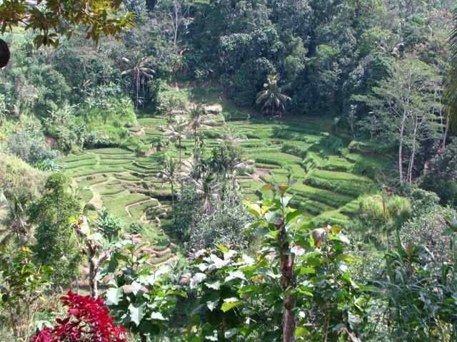 Bali - Tegallalang