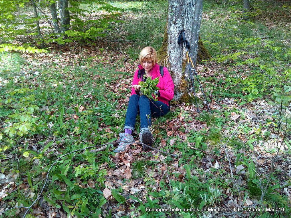 Echappée belle au bois de Montfée.