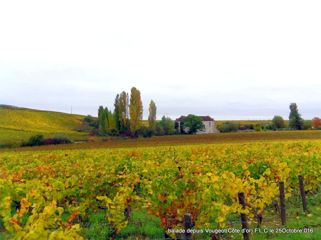 De vignes en combes