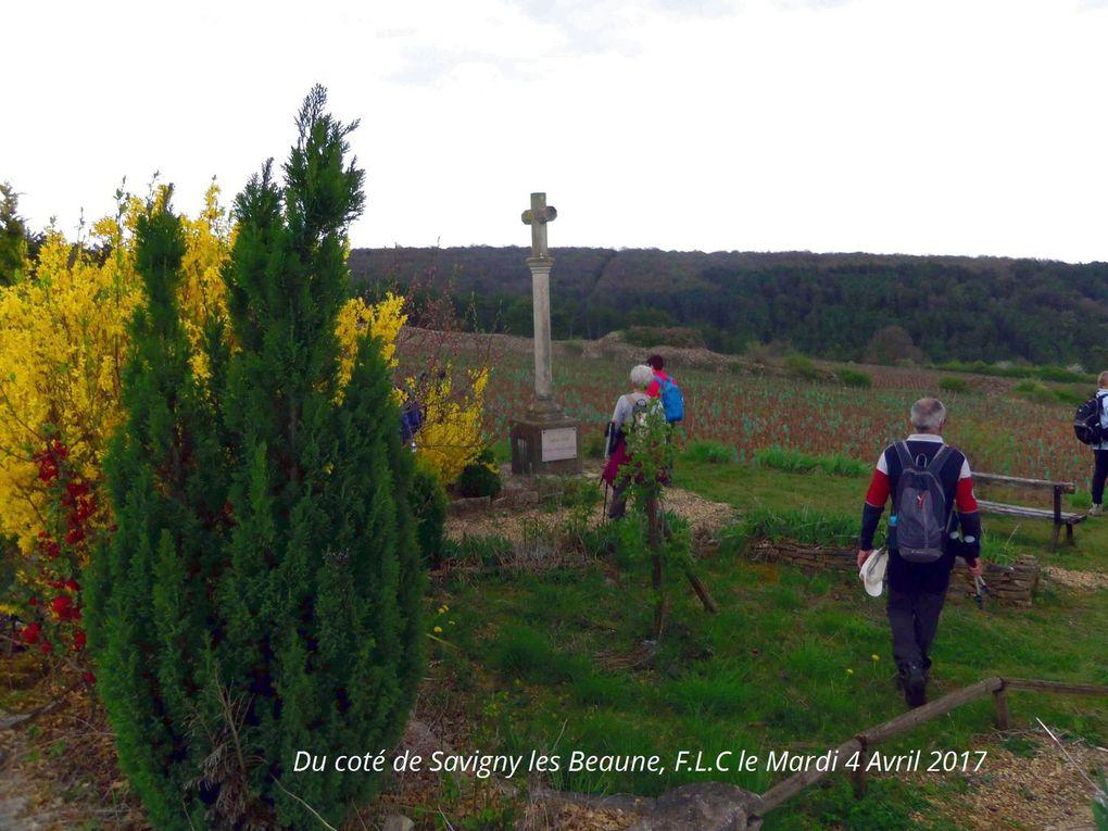 Du coté de Savigny les Beaune