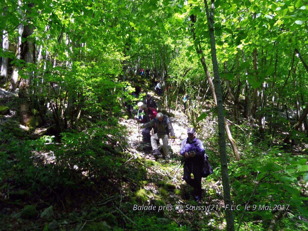 Balade en forêts de Saussy,