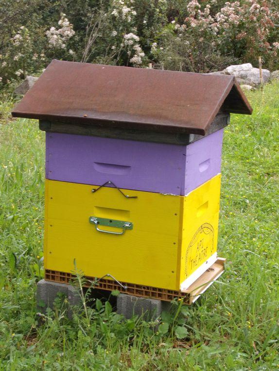 Samedi 25 mars, atelier autour du monde des abeilles dans le jardin du Devois