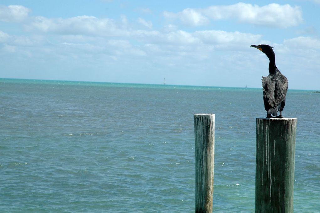 Floride, USA (février 2014)