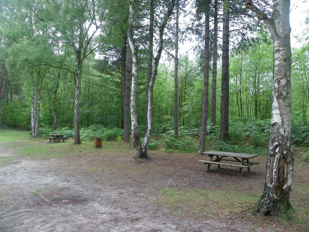 Bois du roi site forestier remarquable et point de ralliement de nombreux marcheurs prés de Crépy en Valois