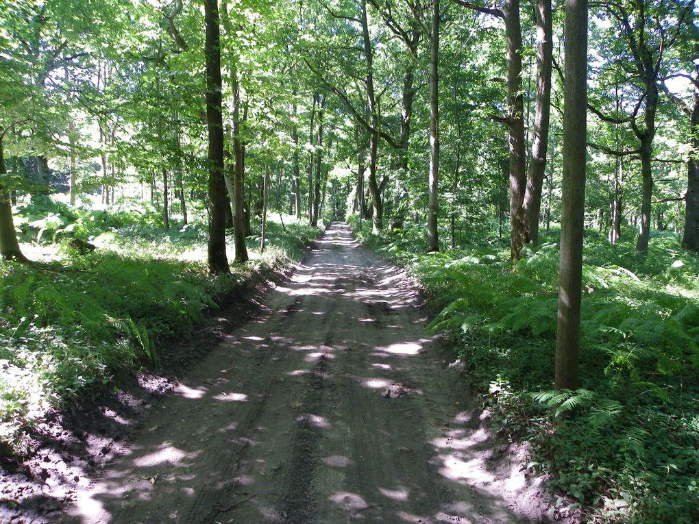 Calicots à Ormoy-Villers et paysages du bois du roi