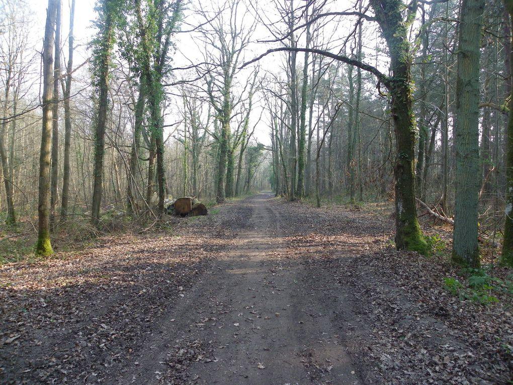 Calicot près de l'école d'Ormoy-Villers et bois du roi mars 2014