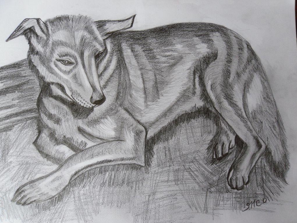 Album- animaux