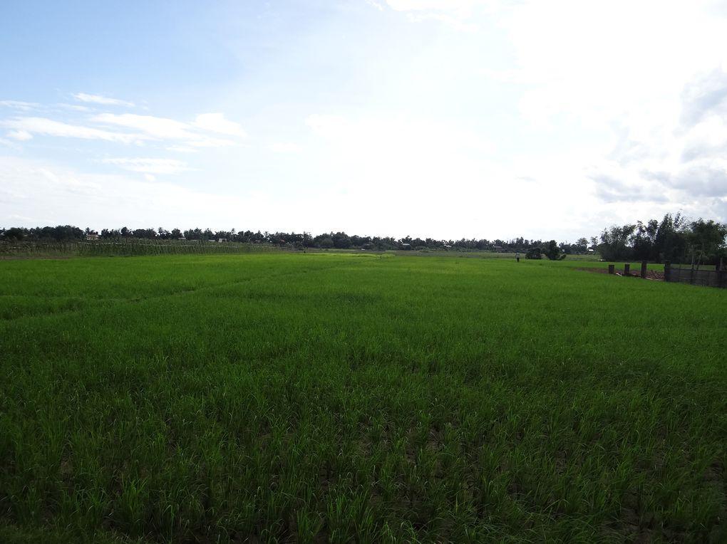 Les rizières à perte de vue